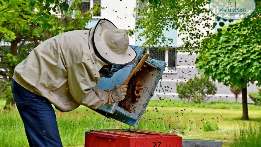 Na zdjęciu widzimy pszczelarza montującego ul.
